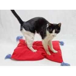 Pernuta cu ciucurasi pentru pisici sau catei